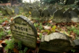 Гробище за домашни любимци