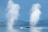 Гореща вълна топи ледника Илулисат