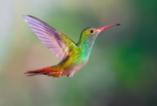 Цветовете на природата