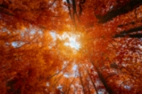 Есента е тук