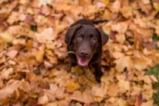 Кучетата и есента