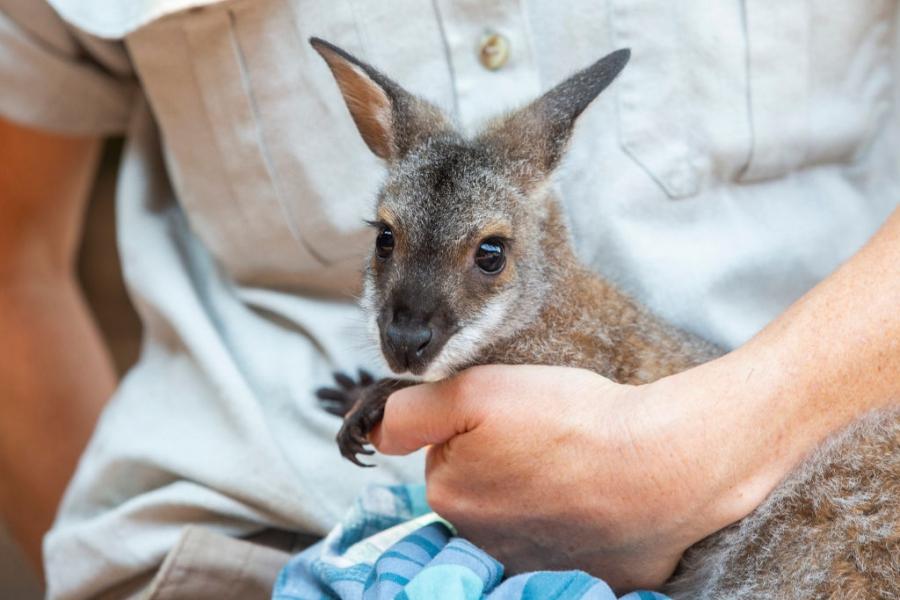 Спасените животни в Австралия