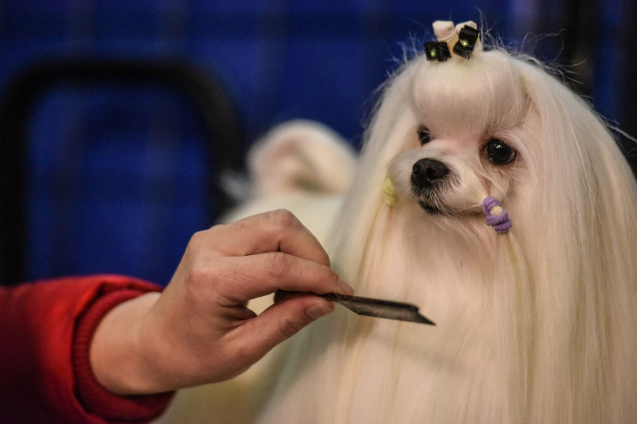 Годишно шоу за кучета в Ню Йорк