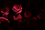 Светът празнува Св. Валентин