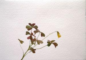 """""""Сънят на пчелите"""" - акварелни рисунки на Геновева Рогова"""