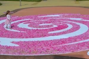 72 000 рози за празника на Казанлък