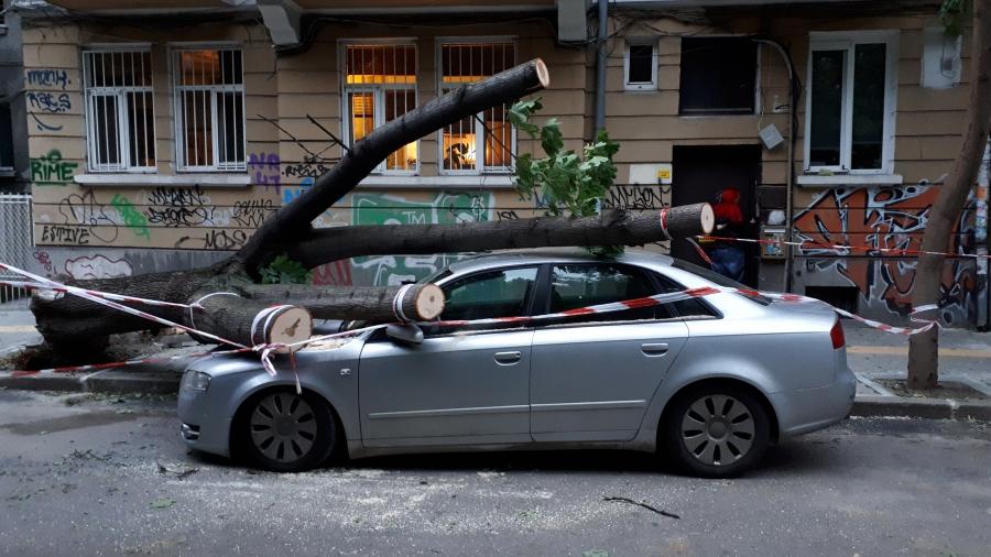 Дърво падна върху кола в София