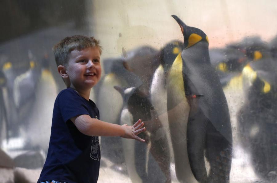 Аквариумът в Мелбърн отвори врати за посетители
