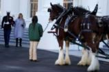 Мелания Тръмп посрещна Коледното дърво в Белия дом