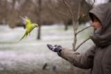 Момче храни папагал в лондонски парк