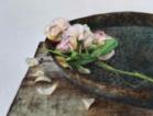 Арт Галерия Le Papillon представя Петя Танева - изложба акварел