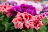 Цветовете на лятото