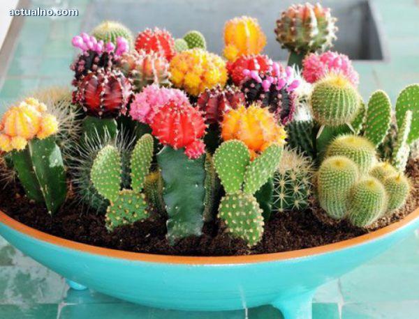 photo of Учените се притесниха за бъдещето на кактусите