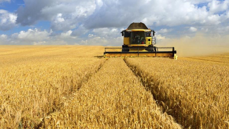 Изключително високи добиви от ечемик и пшеница реализираха зърнопроизводителите в