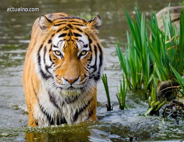 photo of 100 животински видове изчезват всеки ден