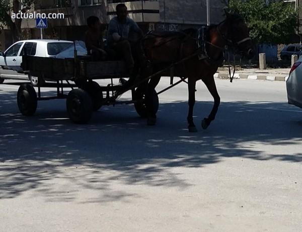 photo of Заради масов бой, ще има забрана каруци да се движат по големите улици в София