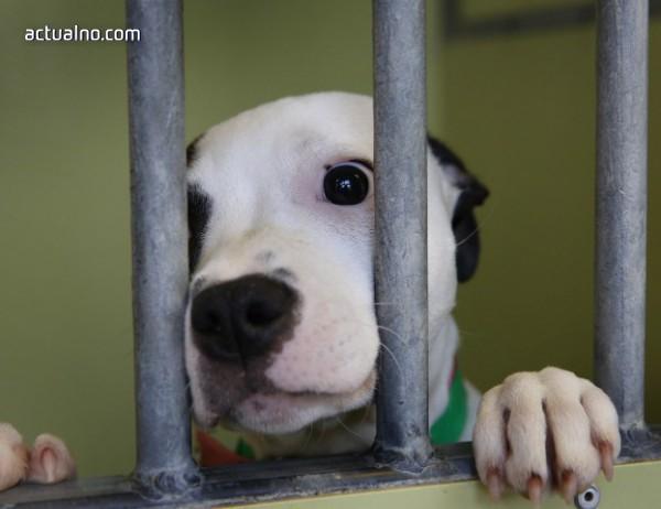 photo of Пропуск в закона позволява на НАП да организира търг за десетки кучета