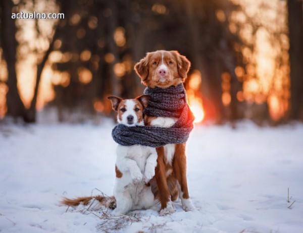 photo of Община Елин Пелин напомня на собствениците на кучета да ги регистрират