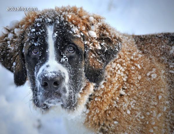 photo of Прогноза за времето - 8 януари, очаква ни опасен студ