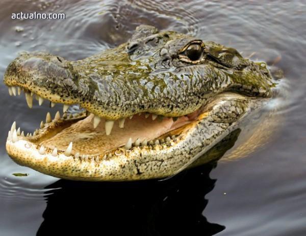 photo of 500 човека на погребение на крокодил в Индия