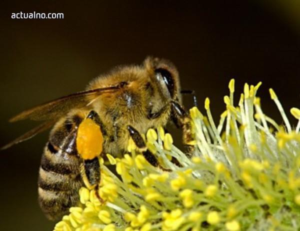 photo of Пчелари от Русе алармират за бъдещето на меда