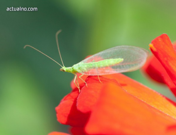 photo of Намаляването на насекомите застрашава света