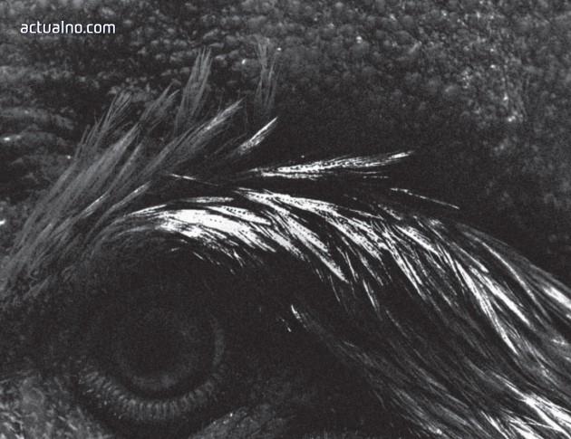 """photo of Откъс от новия роман на Мишел Уелбек """"Серотонин"""""""