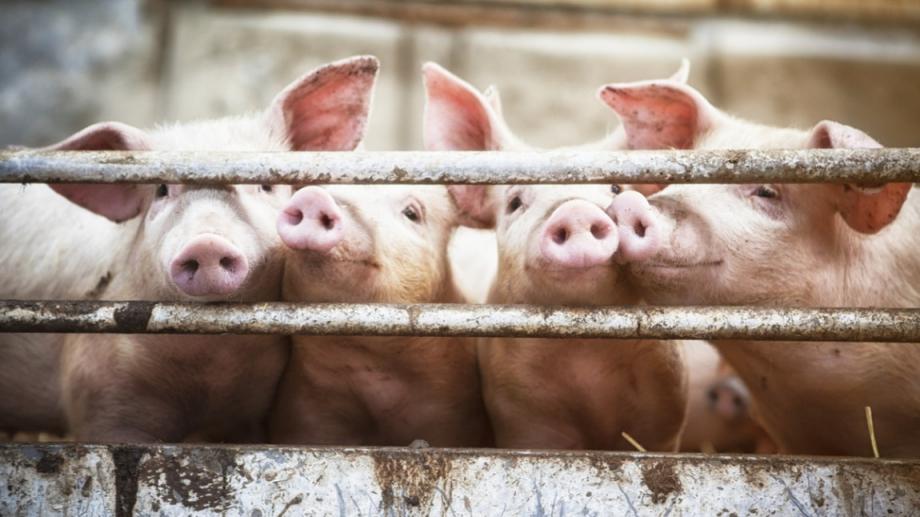 Днес е последният срок, в който животновъдите могат да кандидатстват