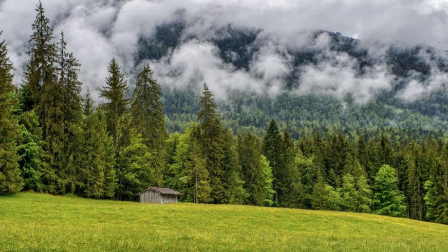 1124 заявления от собственици на малки имоти в горски територии