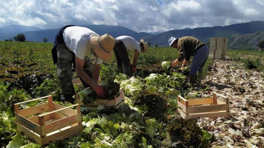 """Държавен фонд """"Земеделие"""" – Разплащателна агенция (ДФЗ – РА) нареди"""